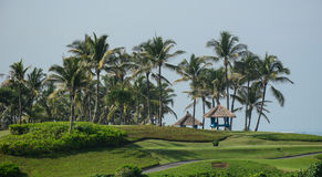 Palm trees and grass at the luxury resort in Bali, Indonesia Stock Images