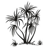 Palm Trees and Grass Silhouettes Stock Photography