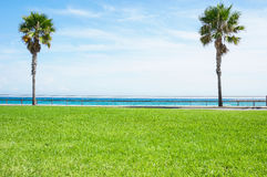 Palm trees in the grass Stock Photography