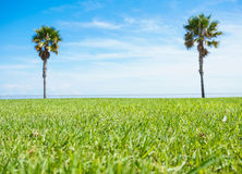 Palm trees in the grass. On the sky backgroundn Royalty Free Stock Image