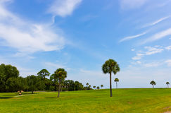 Palm trees on the green field Stock Images