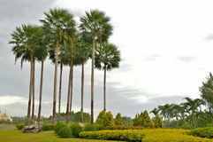 The palm trees  in green garden Royalty Free Stock Photography