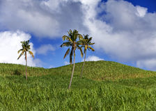 Palm trees on green hills and the blue sky with clouds Stock Photos