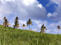 Palm trees on green hills and the blue sky with clouds.Landscape in a sunny day Royalty Free Stock Image