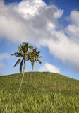 Palm trees on green hills and the blue sky with clouds, Mauritius Stock Images