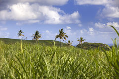 Palm trees on green hills and the blue sky with clouds, Mauritius Royalty Free Stock Photos