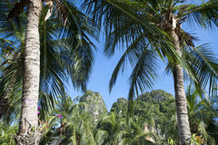 Palm Trees Green Jungle Background Stock Images