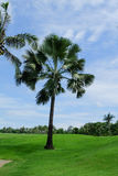 Palm trees on the green lawn Royalty Free Stock Image