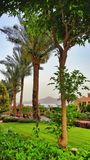 Palm trees on a green lawn Hotel in Egypt Royalty Free Stock Image