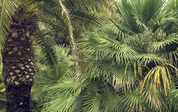 Palm trees. Green leaves. Closeup Stock Photo