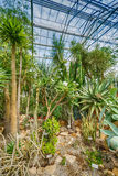Palm trees in greenhouse Royalty Free Stock Photo