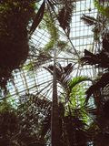 Palm trees in greenhouse royalty free stock image