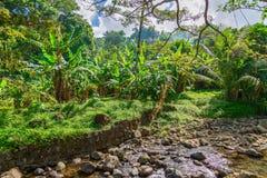 Palm Trees in Grenada, Caribbean. Taken in Grenada Capital City, St. George Royalty Free Stock Photos