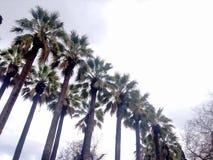 Palm trees. At grey sky Stock Image