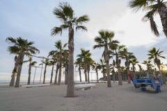 Palm trees. Group of palm trees on the beach of La Concha (Oropesa del Mar - Castellon Stock Image