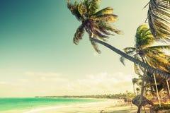 Palm trees grow on a beach. Coast of Atlantic ocean Royalty Free Stock Photography