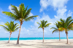 Palm trees grow on empty beach with white sand. Coast of Atlantic ocean, Dominican republic Stock Photos