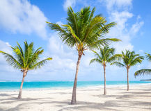 Palm trees grow on empty sandy beach Stock Images