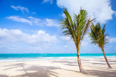 Palm trees grow on empty sandy beach. Dominican republic Royalty Free Stock Photos