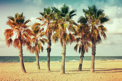 Palm trees grow on empty sandy beach in Spain. Vintage style. Photo with old style colorful retro tonal photo filter correction, instagram old style Stock Photography