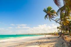 Palm trees grow on sandy beach. Atlantic ocean coast Stock Images