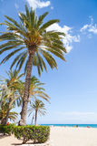 Palm trees grow on sandy beach in Spain Stock Photo