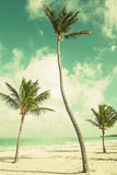 Palm trees growing on sandy beach. Coast of Atlantic ocean Stock Photography
