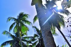 Palm trees under the blue sky royalty free stock photography