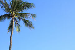 Palm trees in Guam Royalty Free Stock Photos