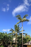 Palm trees in Guam Royalty Free Stock Image