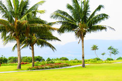 Palm trees in Hainan Stock Images