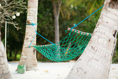 Palm trees and hammock Royalty Free Stock Photo