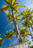 Palm trees and hammock Royalty Free Stock Photography