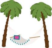 Palm Trees Hammock Stock Image