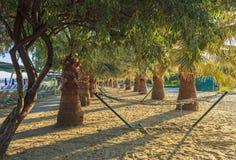 Palm trees and hammocks on the beach Stock Photo