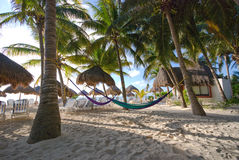 Palm trees and hammocks at a resort Royalty Free Stock Photography