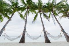 Palm trees with hammocks Royalty Free Stock Image