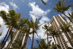 Palm Trees in Hawaii. View through palm tree from Waikiki beach Hawaii Royalty Free Stock Photography