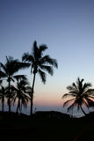 Palm Trees Hawaii. Beautiful Blue Hawaii sunset from Oahu with palm trees silhouetted Stock Photography