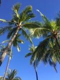 Palm trees Hawaii stock photos