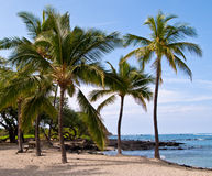 Palm trees on Hawaiian Beach Stock Photography