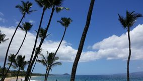 Palm Trees On A Hawaiian Beach. A beautiful Hawaiian beach surrounded by palm trees Stock Photography