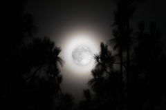Palm Trees and a Hazy Full Moon in California. A Hazy Full Moon in California Stock Photos