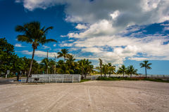 Palm trees at Higgs Beach, Key West, Florida. Royalty Free Stock Photo