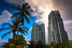 Palm trees and highrises at South Beach, Miami, Florida. Royalty Free Stock Photo