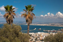Palm trees on the hill overlooking the port and the city Israel Haifa Royalty Free Stock Image