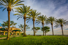 Palm trees at Hilltop Park, in Signal Hill. Long Beach, California stock photos
