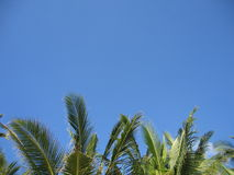 Palm Trees on Horizon. Line of the top of palm trees Stock Photo