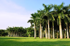 Palm trees horizontally in vast Royalty Free Stock Photos