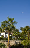 Palm trees and hotel Royalty Free Stock Photos